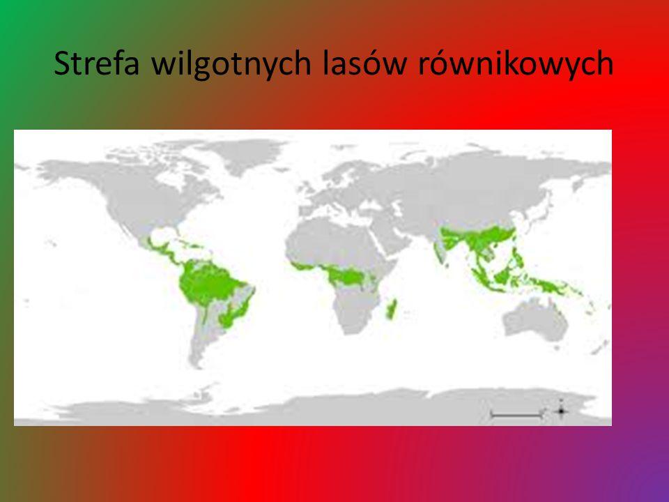 Strefa wilgotnych lasów równikowych