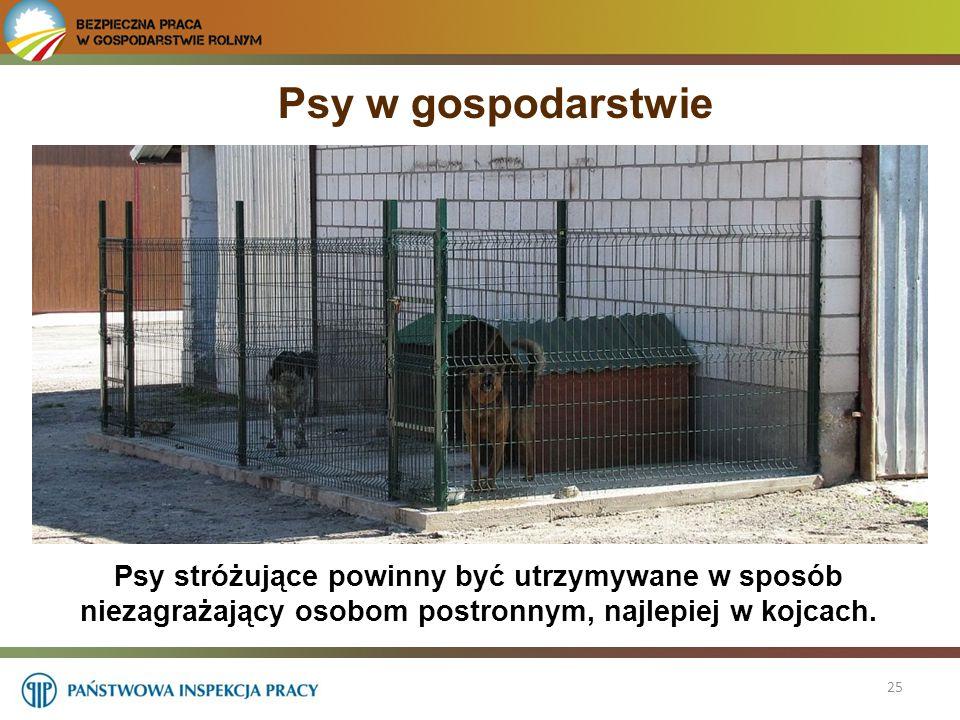 Psy w gospodarstwie