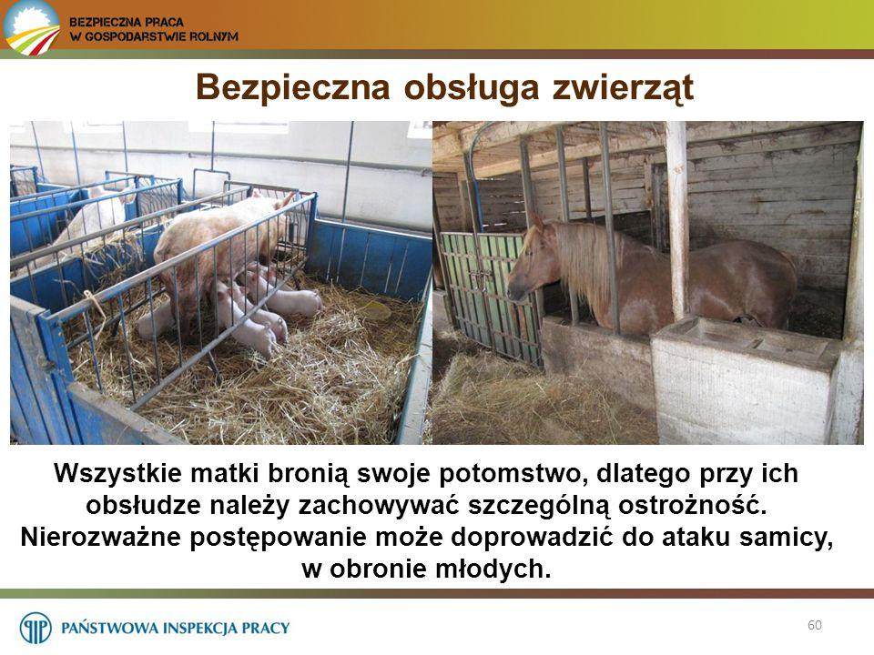 Bezpieczna obsługa zwierząt