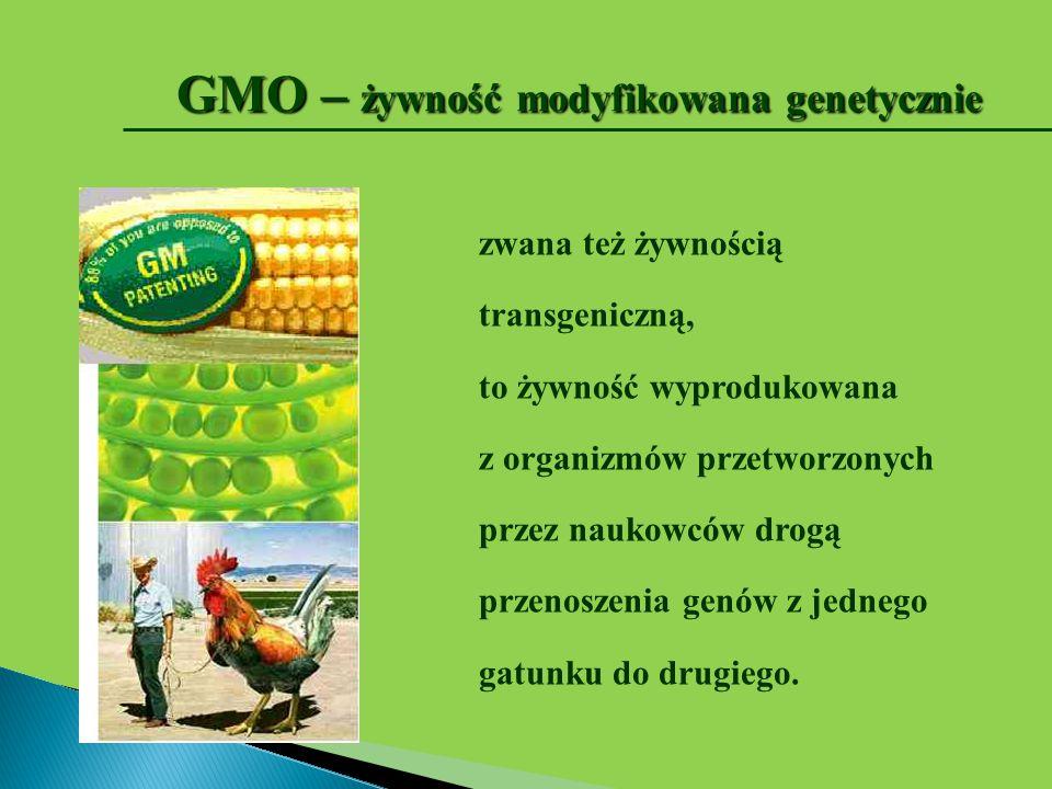 GMO – żywność modyfikowana genetycznie