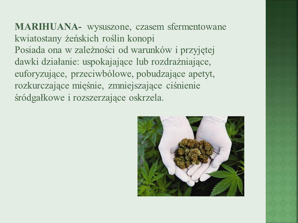 MARIHUANA- wysuszone, czasem sfermentowane kwiatostany żeńskich roślin konopi