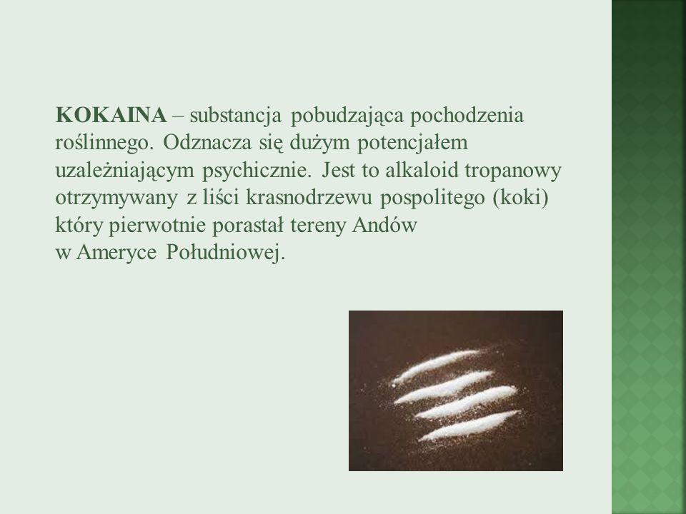 KOKAINA – substancja pobudzająca pochodzenia roślinnego
