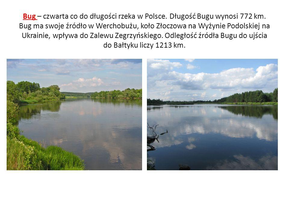 Bug – czwarta co do długości rzeka w Polsce. Długość Bugu wynosi 772 km.