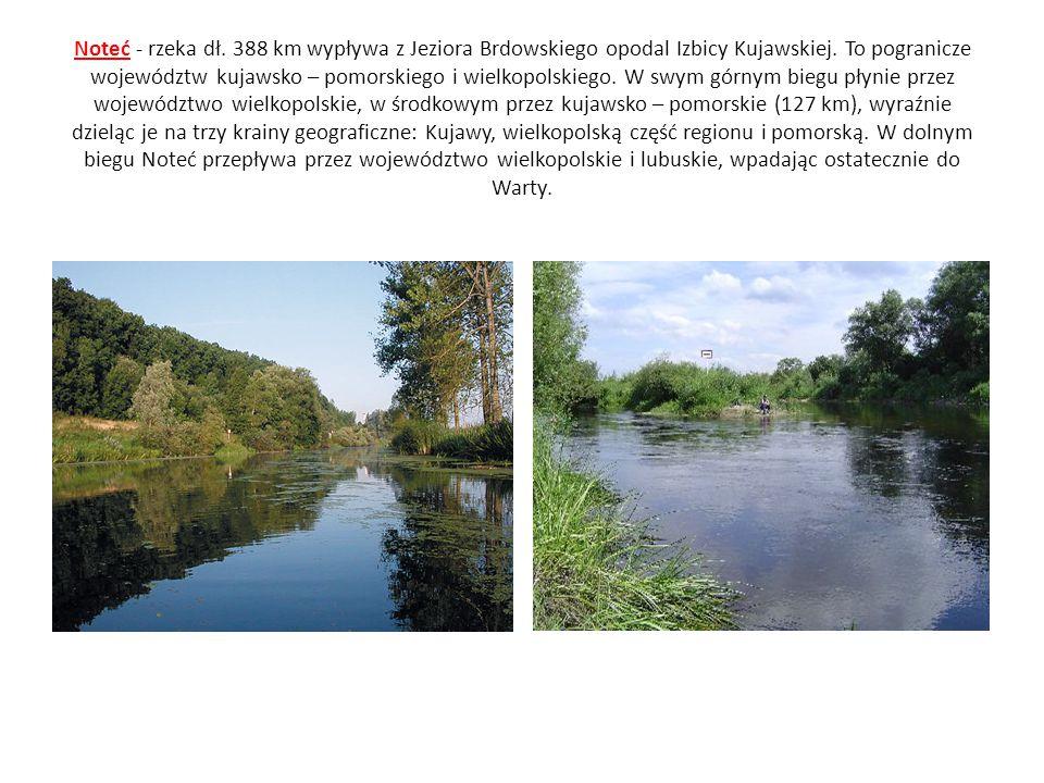 Noteć - rzeka dł. 388 km wypływa z Jeziora Brdowskiego opodal Izbicy Kujawskiej.