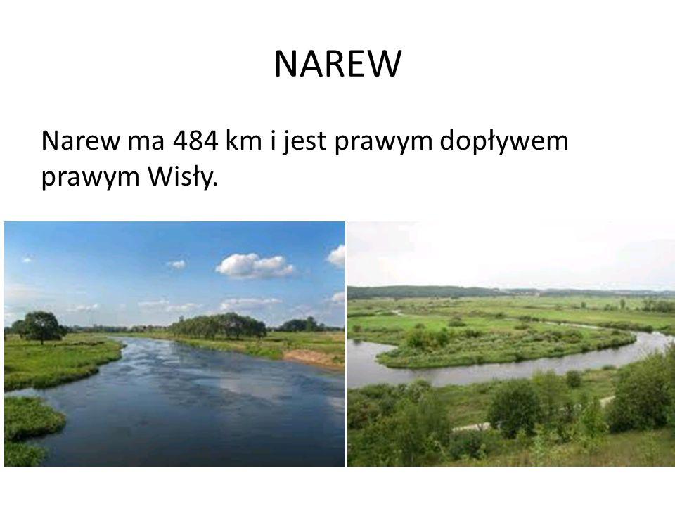 NAREW Narew ma 484 km i jest prawym dopływem prawym Wisły.