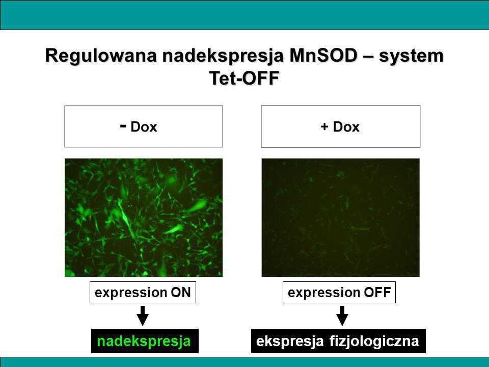 Regulowana nadekspresja MnSOD – system