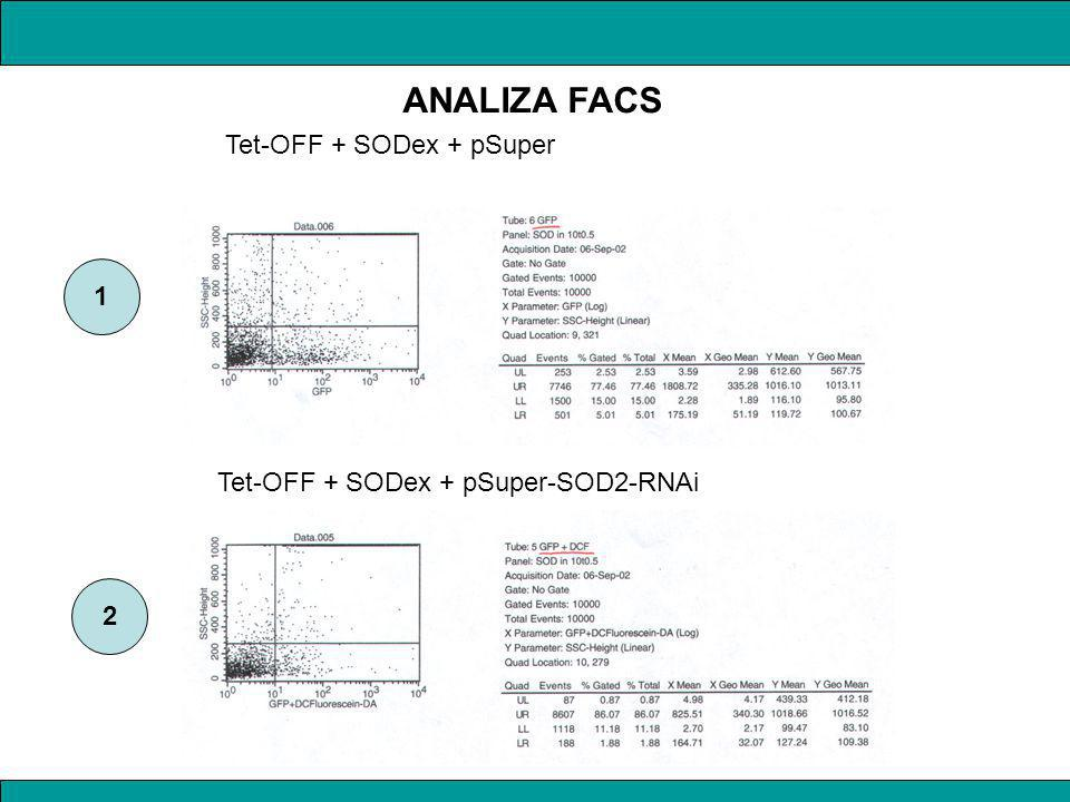 ANALIZA FACS Tet-OFF + SODex + pSuper 1
