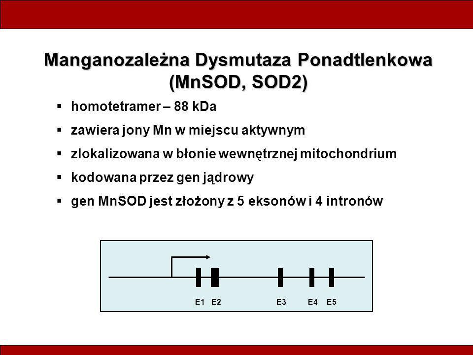 Manganozależna Dysmutaza Ponadtlenkowa