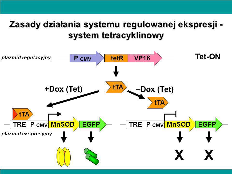 Zasady działania systemu regulowanej ekspresji - system tetracyklinowy