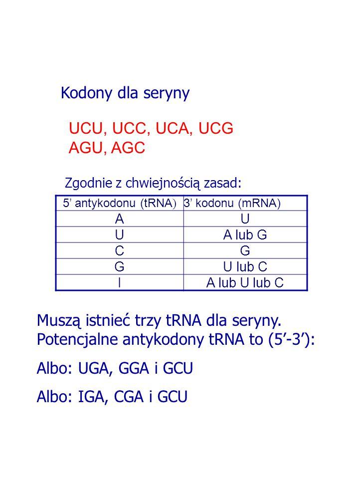 Kodony dla seryny UCU, UCC, UCA, UCG AGU, AGC