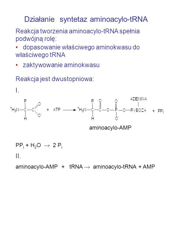 Działanie syntetaz aminoacylo-tRNA