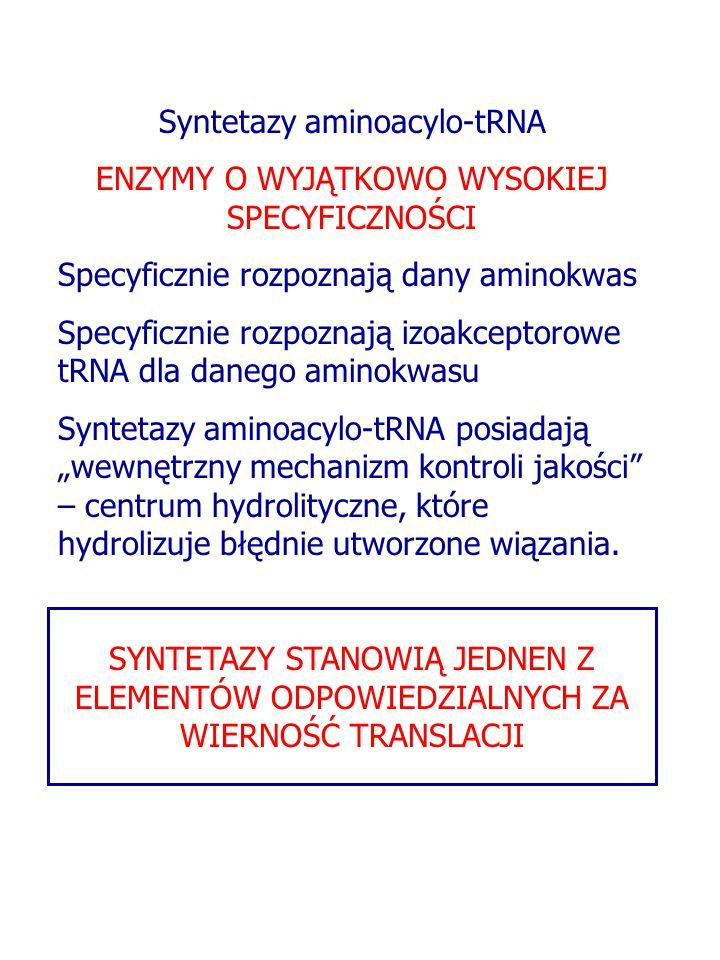 Syntetazy aminoacylo-tRNA ENZYMY O WYJĄTKOWO WYSOKIEJ SPECYFICZNOŚCI