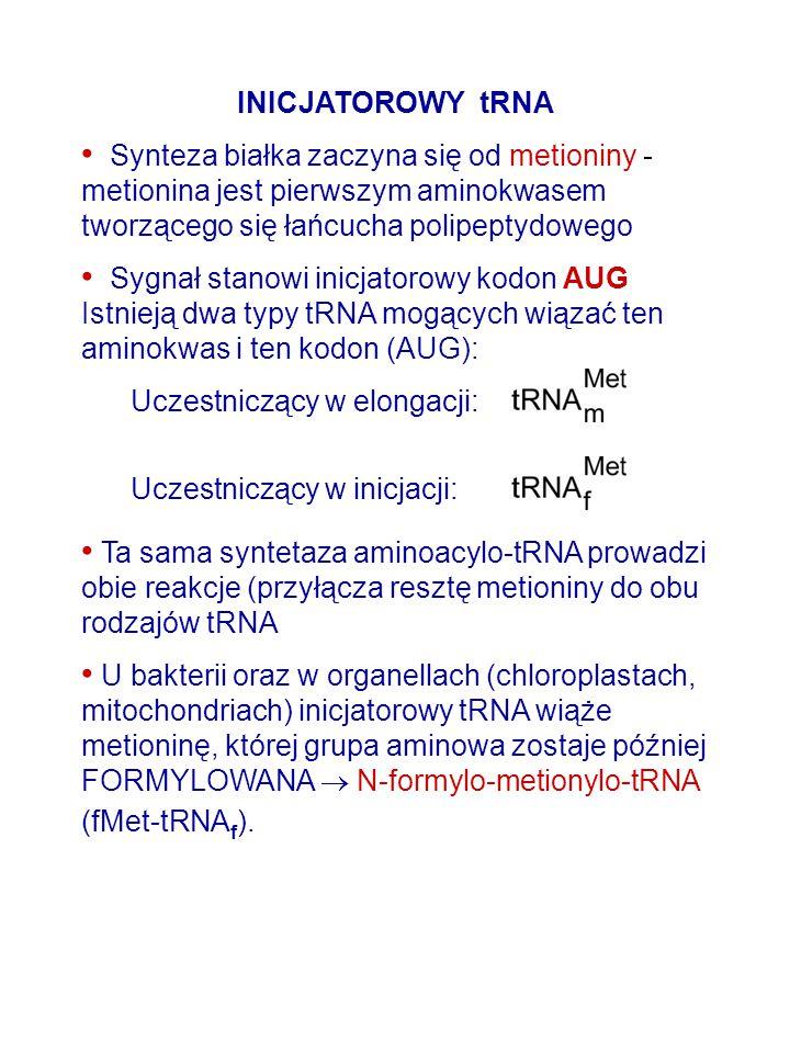 INICJATOROWY tRNA Synteza białka zaczyna się od metioniny - metionina jest pierwszym aminokwasem tworzącego się łańcucha polipeptydowego.