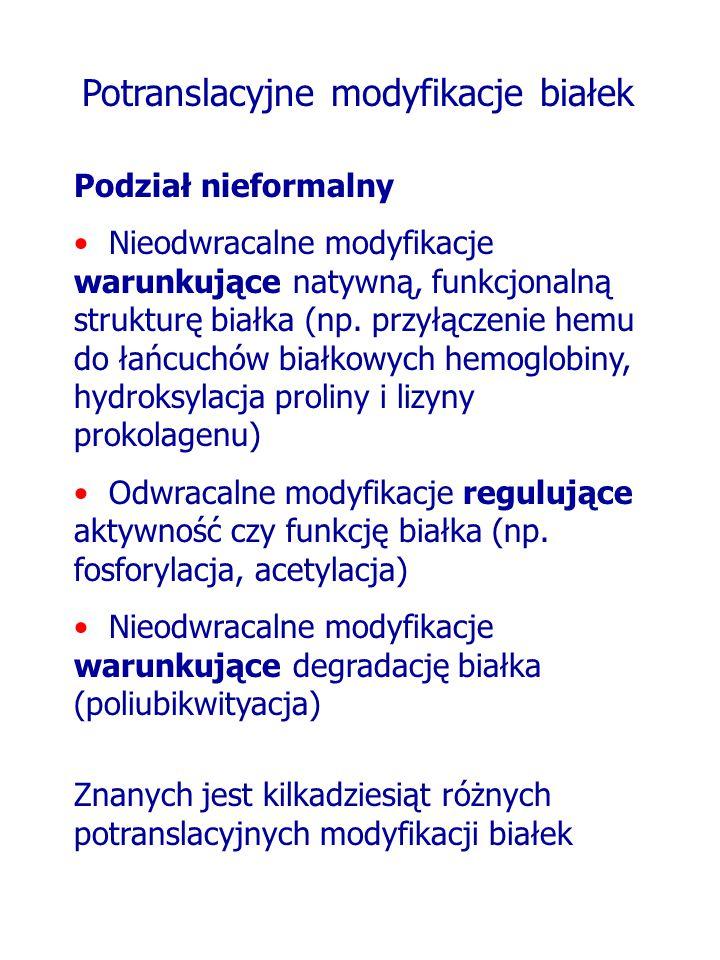 Potranslacyjne modyfikacje białek