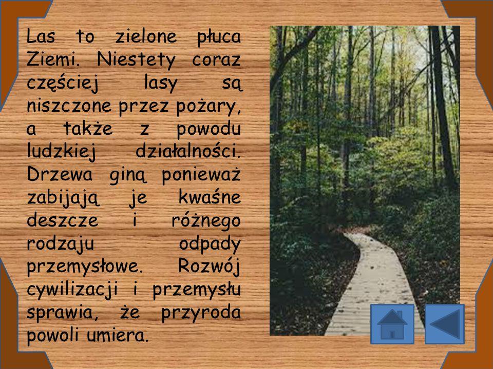 Las to zielone płuca Ziemi