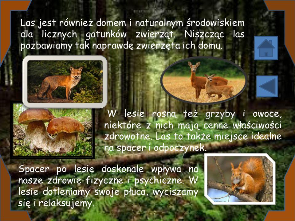 Las jest również domem i naturalnym środowiskiem dla licznych gatunków zwierząt. Niszcząc las pozbawiamy tak naprawdę zwierzęta ich domu.