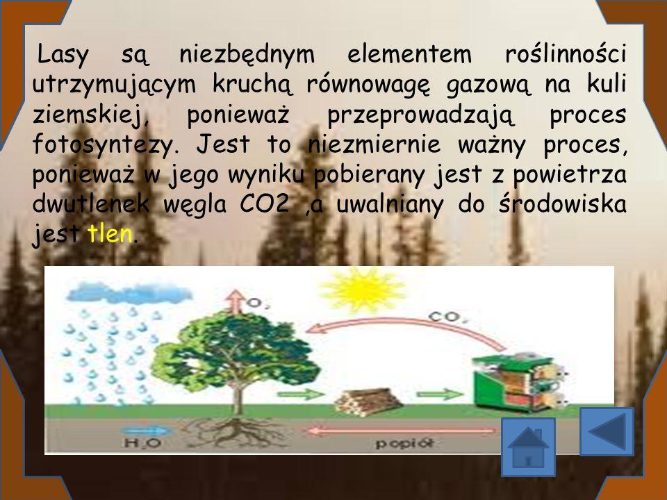 Lasy są niezbędnym elementem roślinności utrzymującym kruchą równowagę gazową na kuli ziemskiej, ponieważ przeprowadzają proces fotosyntezy.