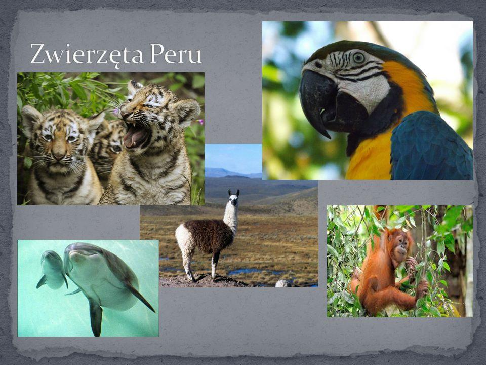 Zwierzęta Peru