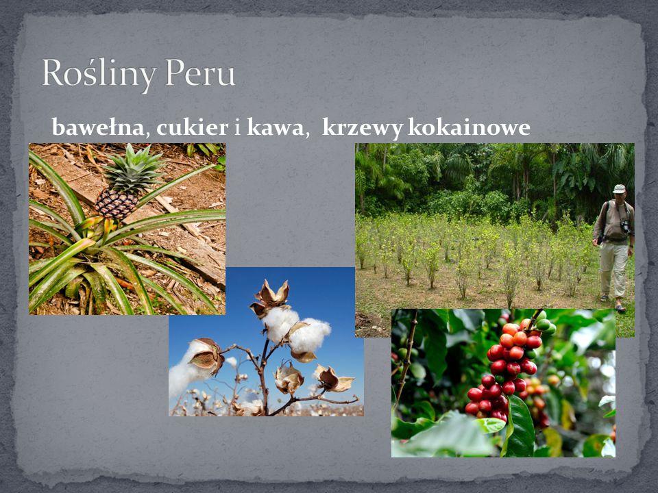 Rośliny Peru bawełna, cukier i kawa, krzewy kokainowe