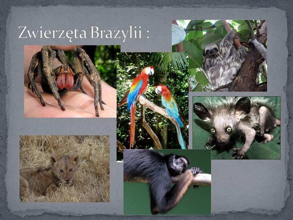 Zwierzęta Brazylii :