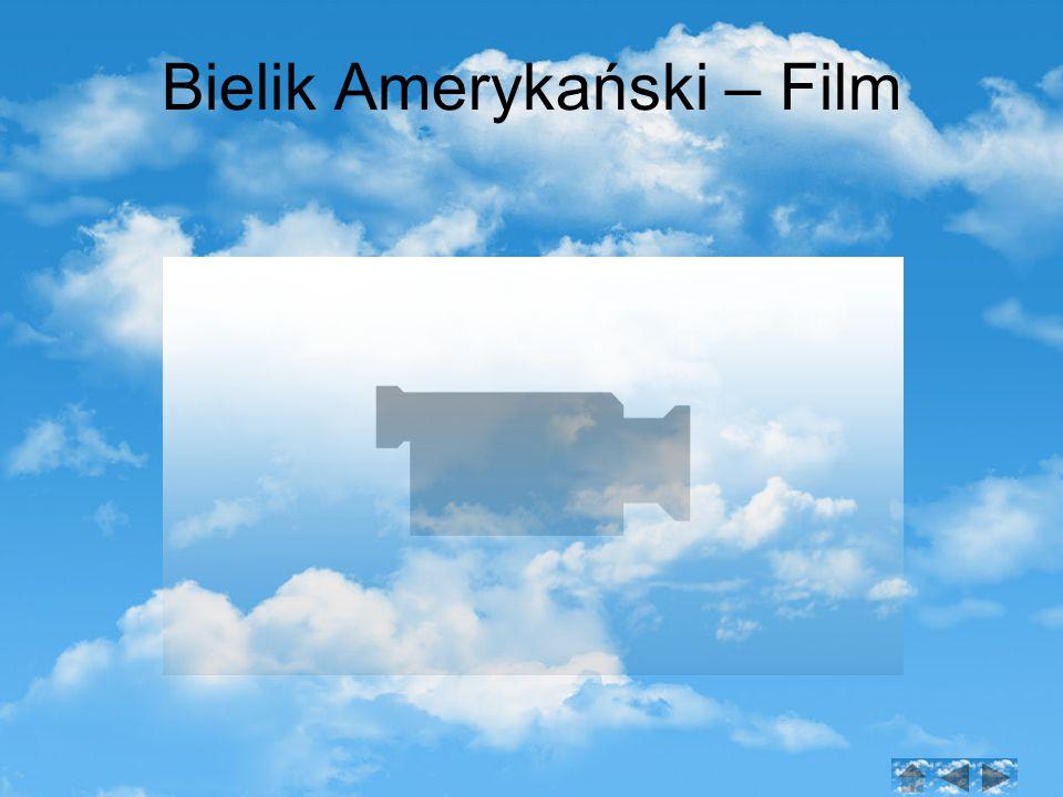 Bielik Amerykański – Film