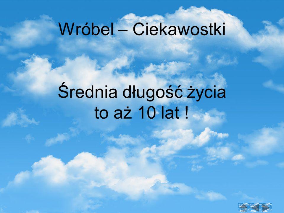 Wróbel – Ciekawostki Średnia długość życia to aż 10 lat !