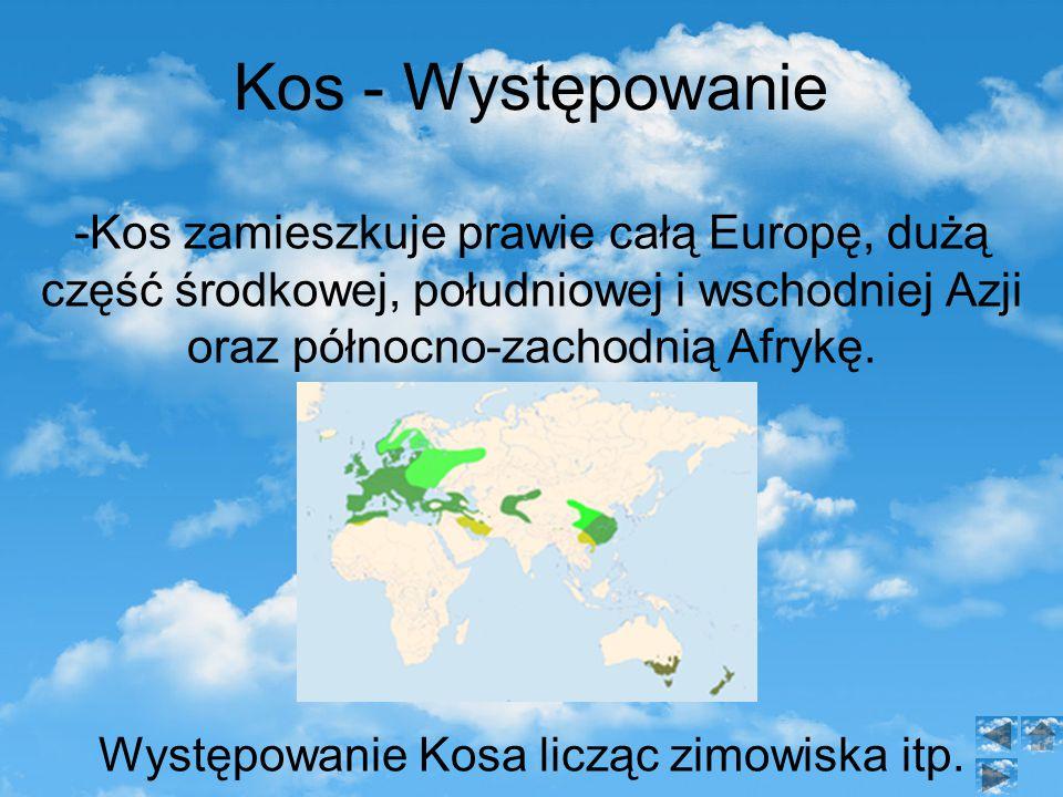 Występowanie Kosa licząc zimowiska itp.