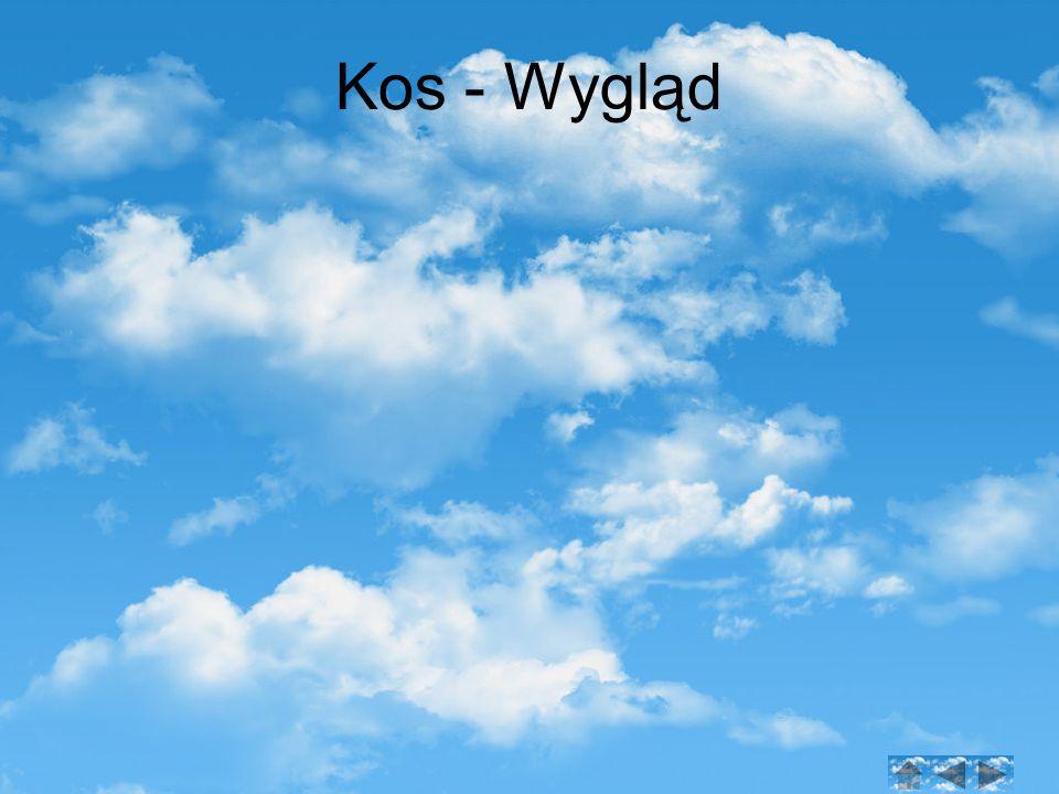 Kos - Wygląd
