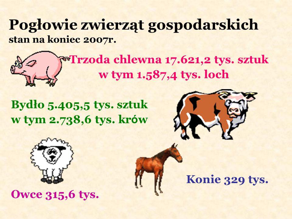 Pogłowie zwierząt gospodarskich stan na koniec 2007r.