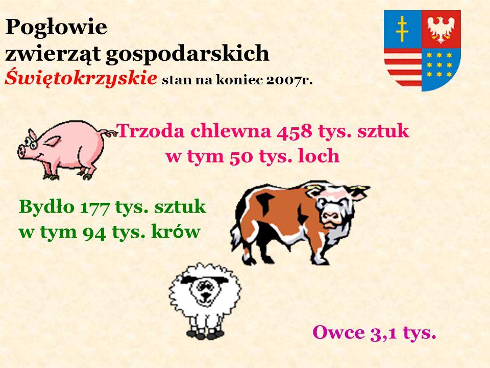 Pogłowie zwierząt gospodarskich Świętokrzyskie stan na koniec 2007r.
