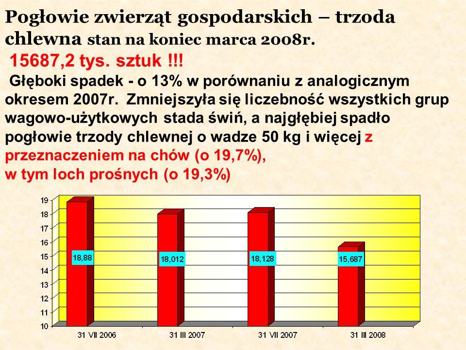 Pogłowie zwierząt gospodarskich – trzoda chlewna stan na koniec marca 2008r.