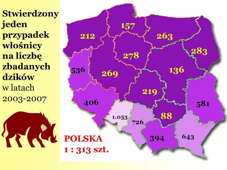 Stwierdzony jeden przypadek włośnicy na liczbę zbadanych dzików w latach 2003-2007