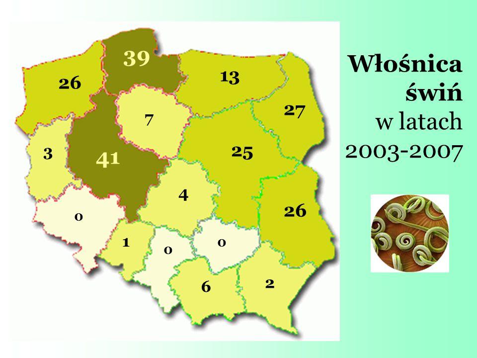 Włośnica świń w latach 2003-2007