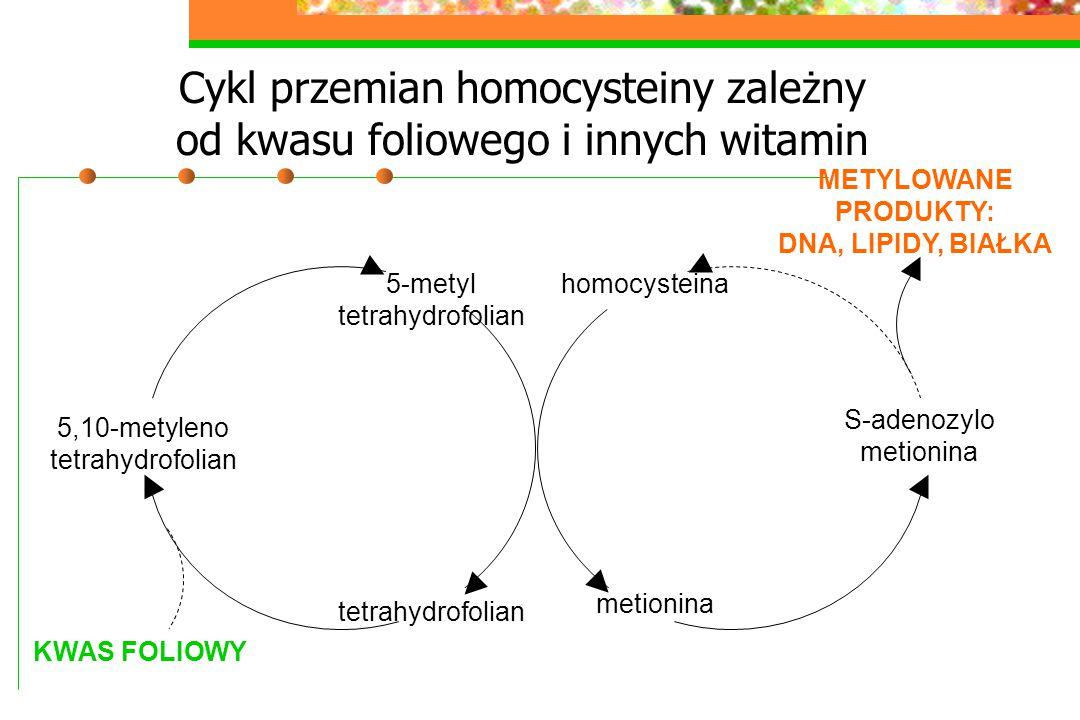 Cykl przemian homocysteiny zależny od kwasu foliowego i innych witamin