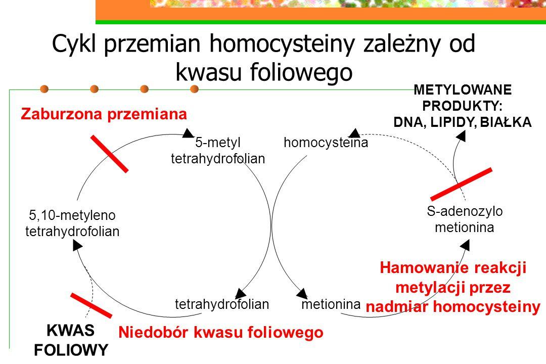 Cykl przemian homocysteiny zależny od kwasu foliowego