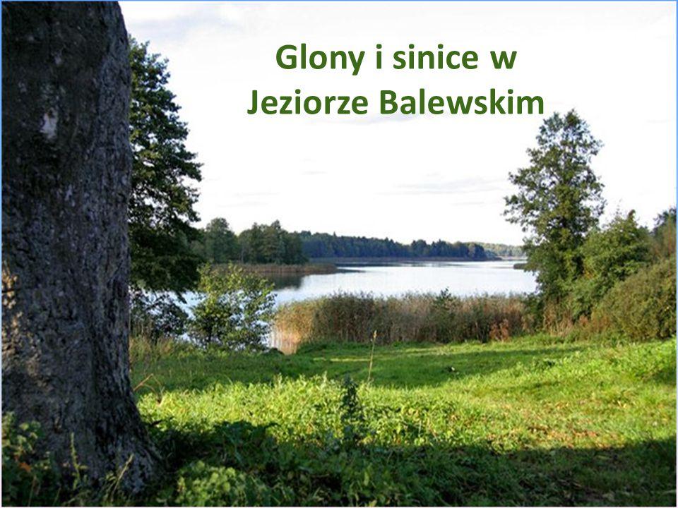 Glony i sinice w jeziorze Balewskim
