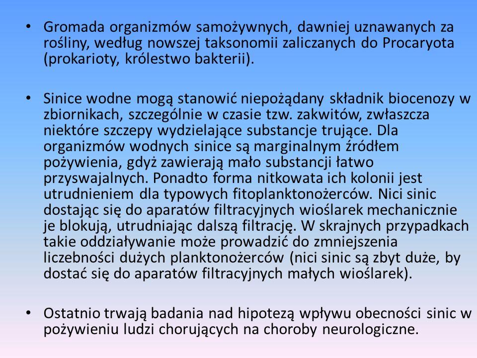 Gromada organizmów samożywnych, dawniej uznawanych za rośliny, według nowszej taksonomii zaliczanych do Procaryota (prokarioty, królestwo bakterii).