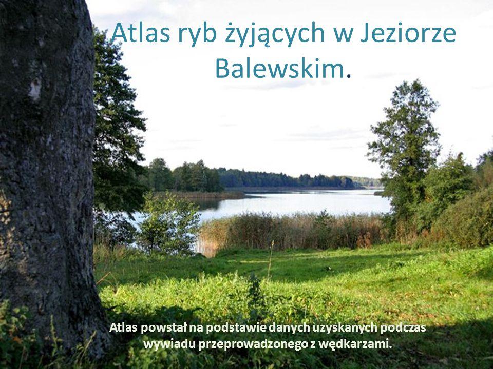 Atlas ryb żyjących w Jeziorze Balewskim.