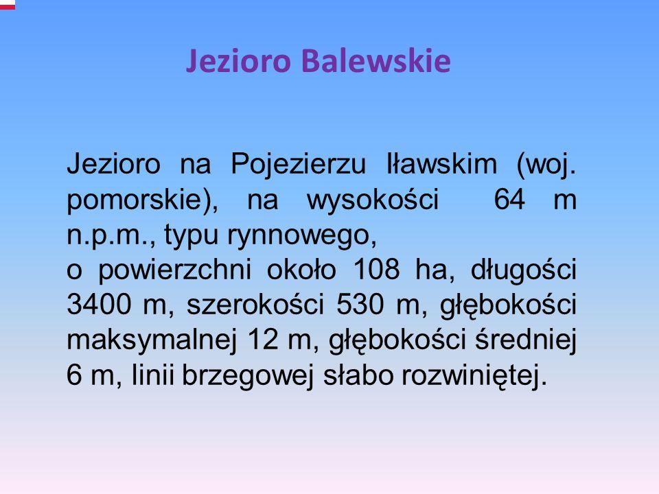 Jezioro Balewskie Jezioro na Pojezierzu Iławskim (woj. pomorskie), na wysokości 64 m n.p.m., typu rynnowego,