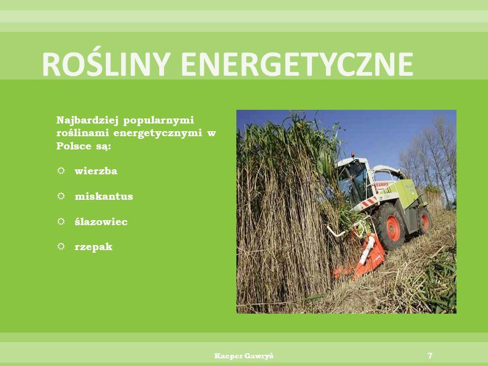 ROŚLINY ENERGETYCZNE Najbardziej popularnymi roślinami energetycznymi w Polsce są: wierzba. miskantus.