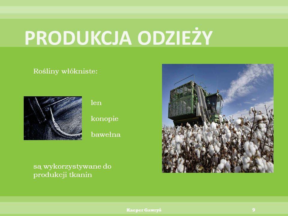 PRODUKCJA ODZIEŻY Rośliny włókniste: len konopie bawełna