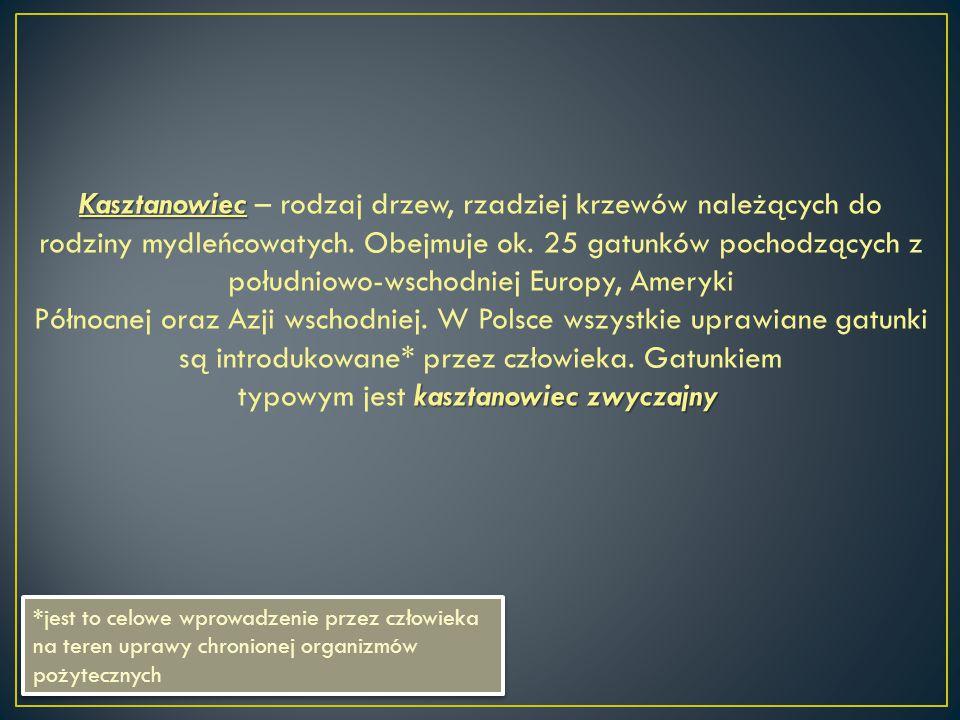 Kasztanowiec – rodzaj drzew, rzadziej krzewów należących do rodziny mydleńcowatych. Obejmuje ok. 25 gatunków pochodzących z południowo-wschodniej Europy, Ameryki Północnej oraz Azji wschodniej. W Polsce wszystkie uprawiane gatunki są introdukowane* przez człowieka. Gatunkiem typowym jest kasztanowiec zwyczajny