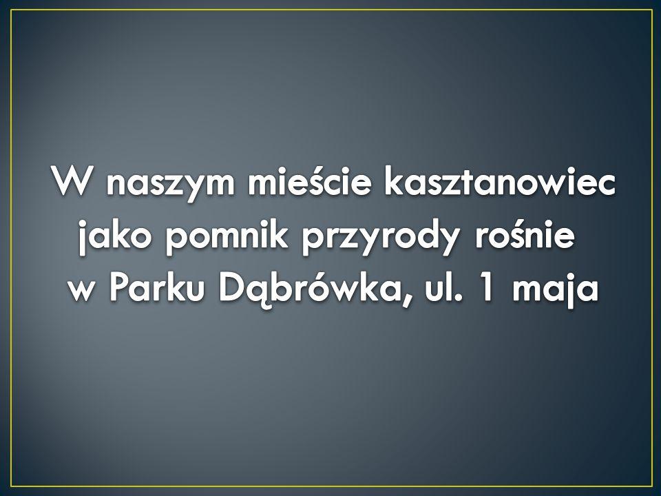 W naszym mieście kasztanowiec jako pomnik przyrody rośnie w Parku Dąbrówka, ul. 1 maja