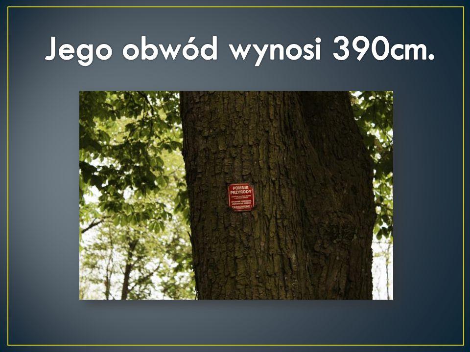 Jego obwód wynosi 390cm.