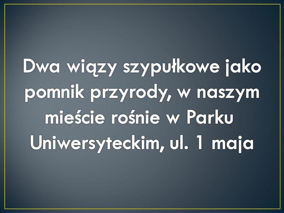 Dwa wiązy szypułkowe jako pomnik przyrody, w naszym mieście rośnie w Parku Uniwersyteckim, ul.