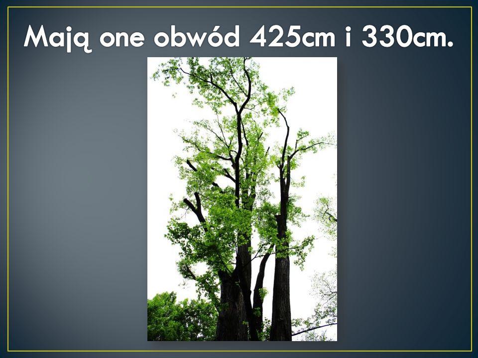 Mają one obwód 425cm i 330cm.