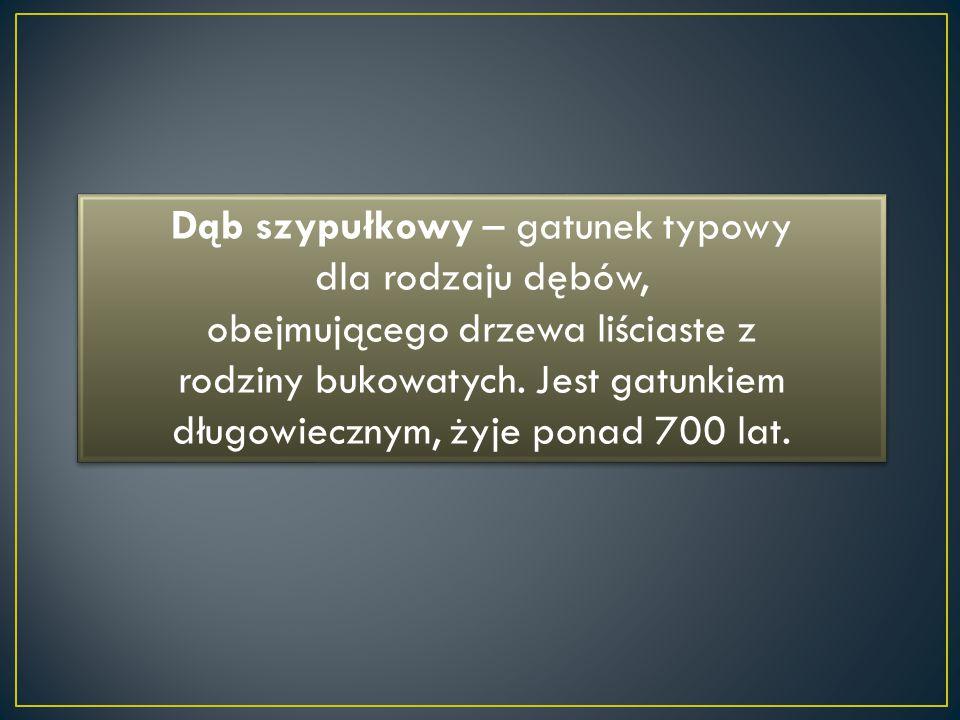 Dąb szypułkowy – gatunek typowy dla rodzaju dębów, obejmującego drzewa liściaste z rodziny bukowatych.