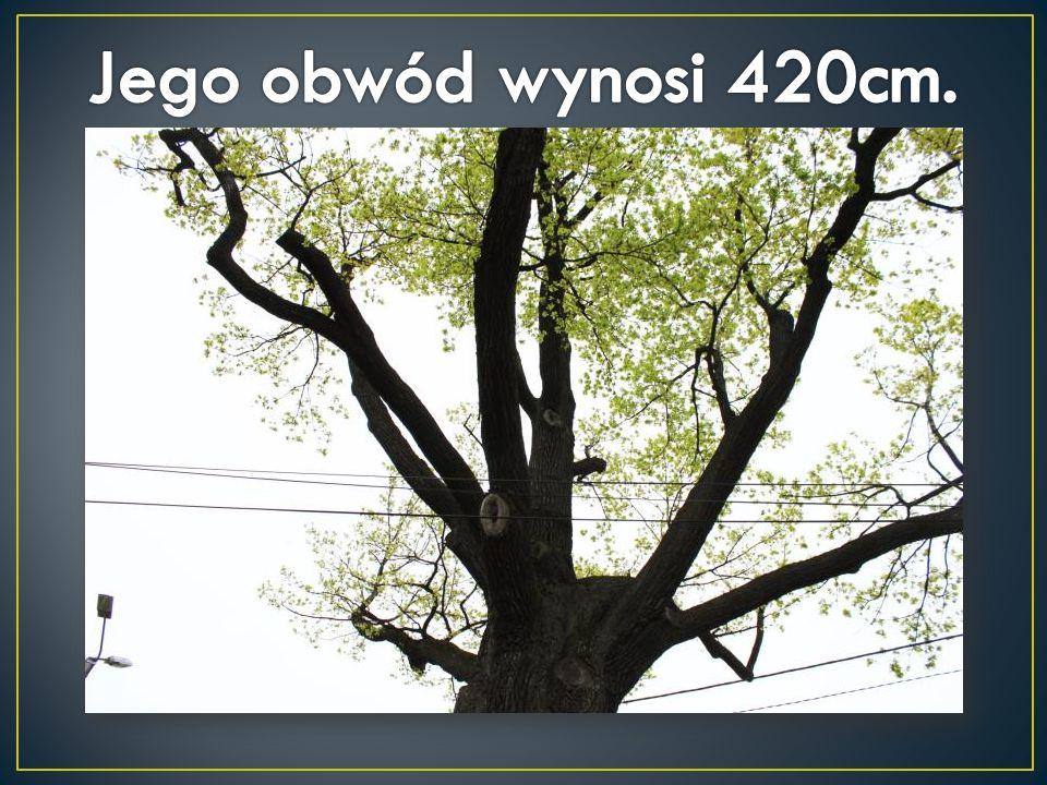 Jego obwód wynosi 420cm.