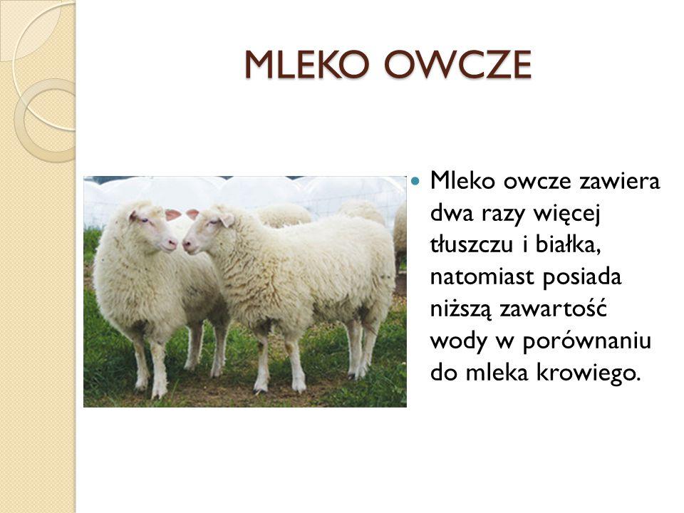 MLEKO OWCZE Mleko owcze zawiera dwa razy więcej tłuszczu i białka, natomiast posiada niższą zawartość wody w porównaniu do mleka krowiego.