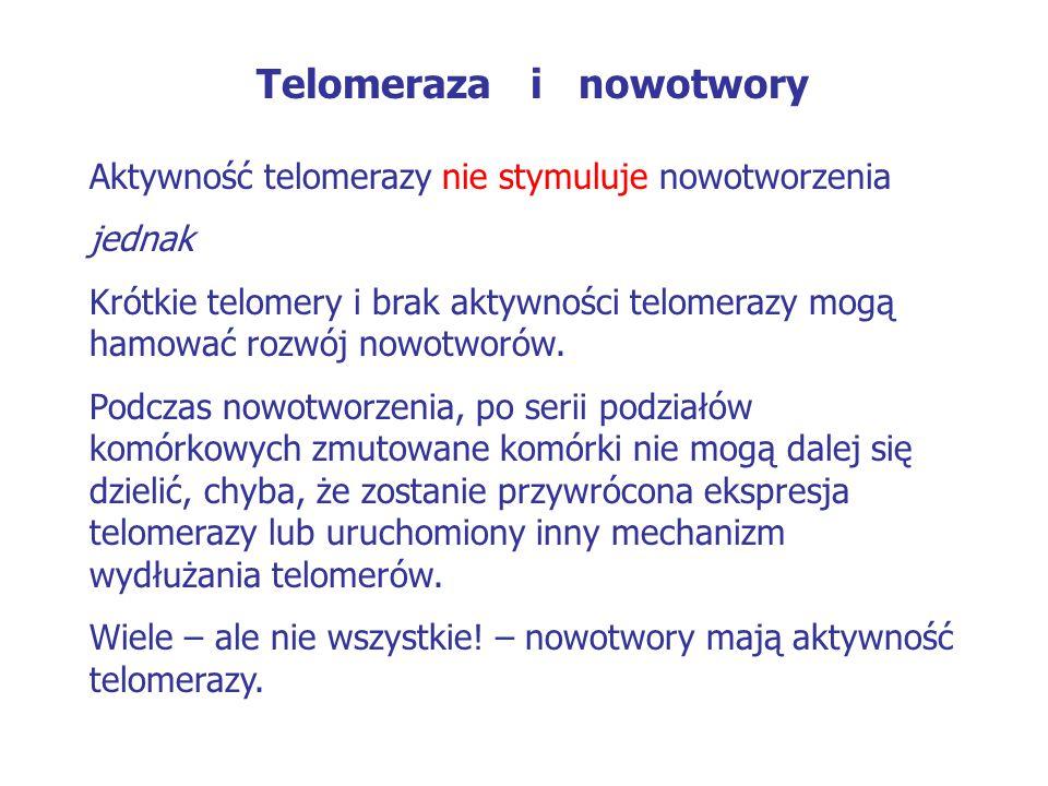 Telomeraza i nowotwory